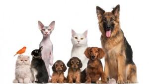 adopter un animal domestique