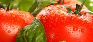 La tomate, un légume qui vous veut du bien