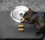 Maigrir en mangeant mieux